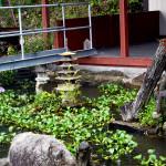 涅槃堂池のホテイ草