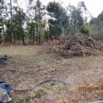 立ち枯れ木の処理の様子