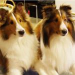寺の愛犬LouisちゃんとJohnちゃん