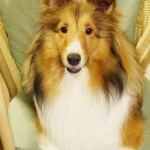 愛犬のmomoちゃん