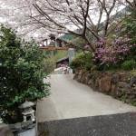 満開の梅の花 交替印