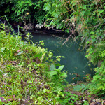 本堂上のホタル池